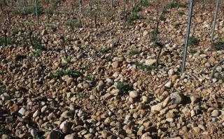 Les galets roulés, typiques de Boutenac.